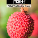 lychee fruit hanging from a tree