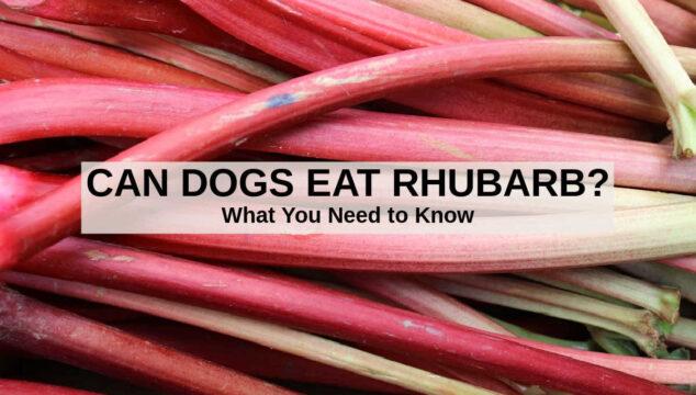 a bunch of fresh rhubarb stalks