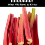a pile of rhubarb stalks
