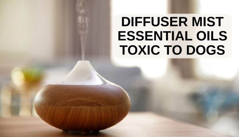essential oil mist diffuser on a table