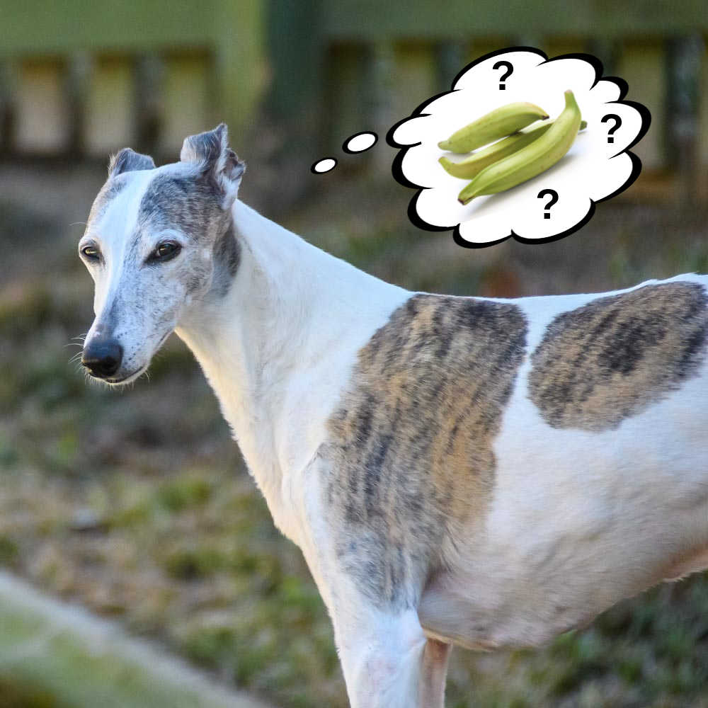 dog wondering about plantains