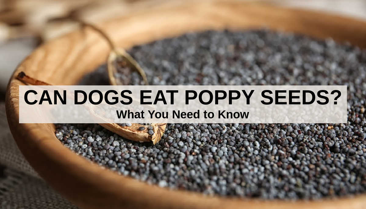 closeup of a bowl of poppy seeds