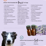 a list of diffuser mist essential oils toxic to dogs