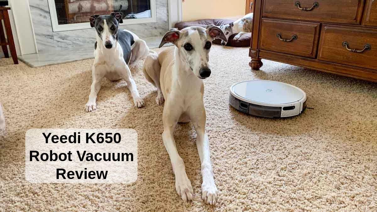 Yeedi k650 robot vacuum and three whippet dogs
