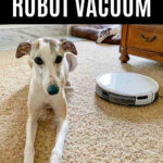 whippet dog next to a Yeedi k650 robot vacuum