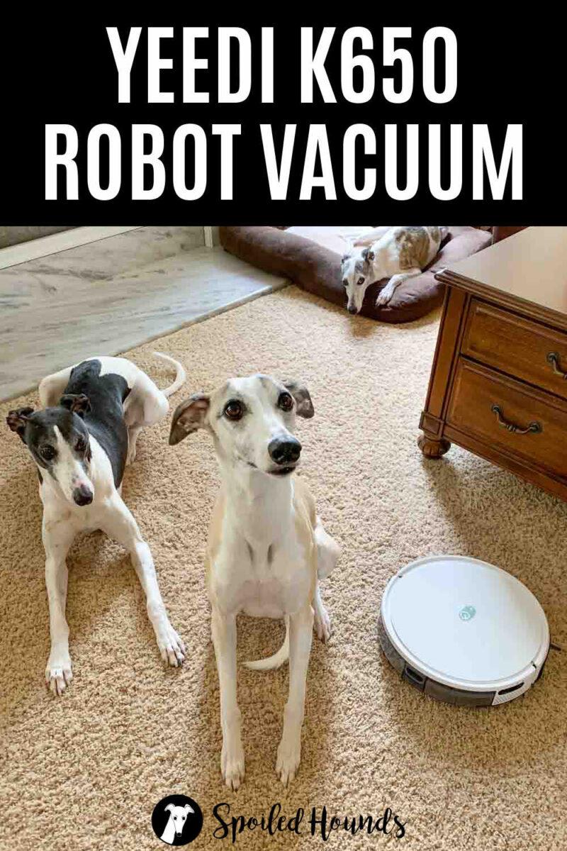 three dogs and a Yeedi k650 robot vacuum