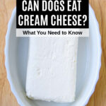 cream cheese block in a dish