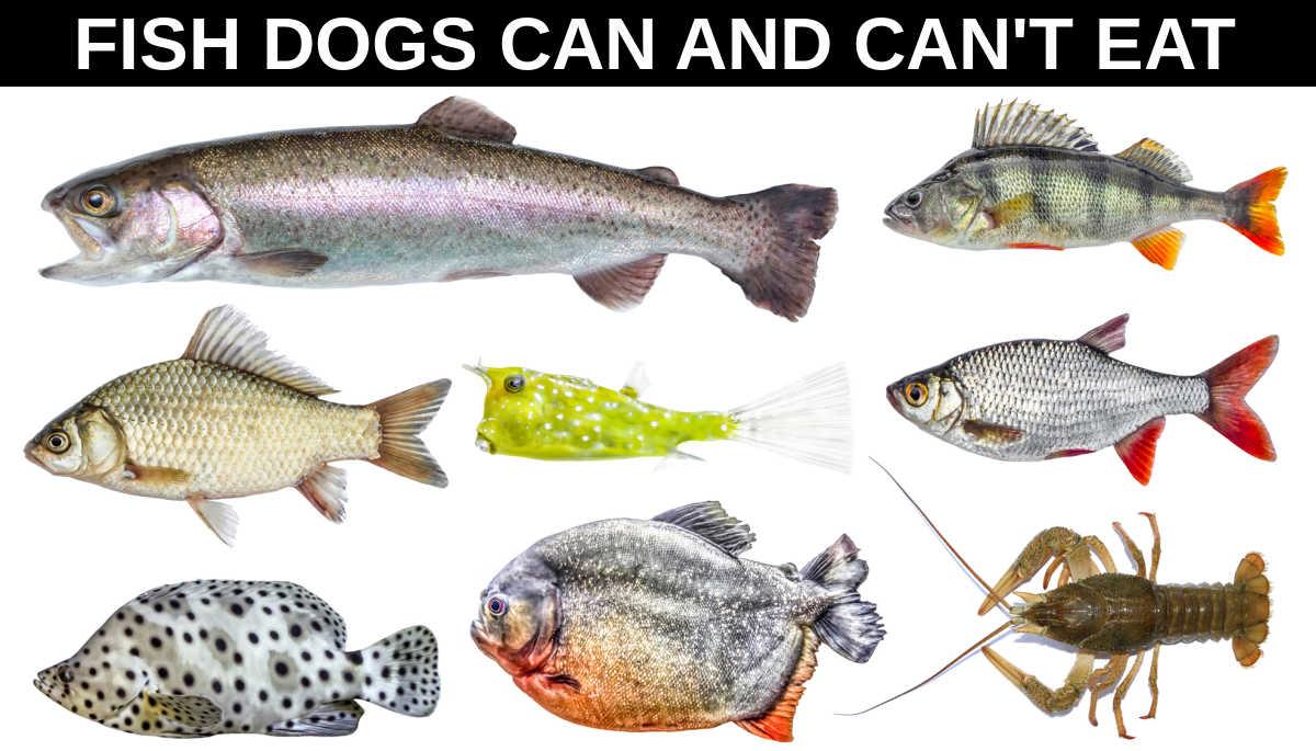 various species of fish