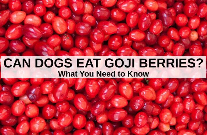 a pile of fresh goji berries