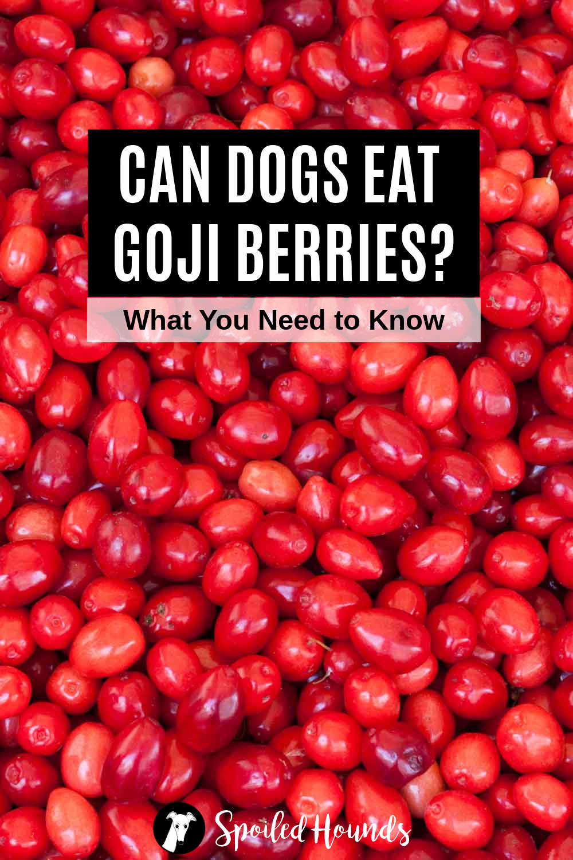 a bunch of fresh goji berries