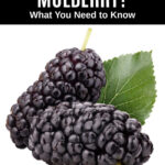two mulberries and a mulberry leaf