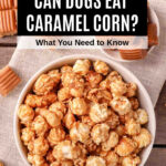 a bowl of caramel popcorn