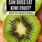 inside of kiwi fruit