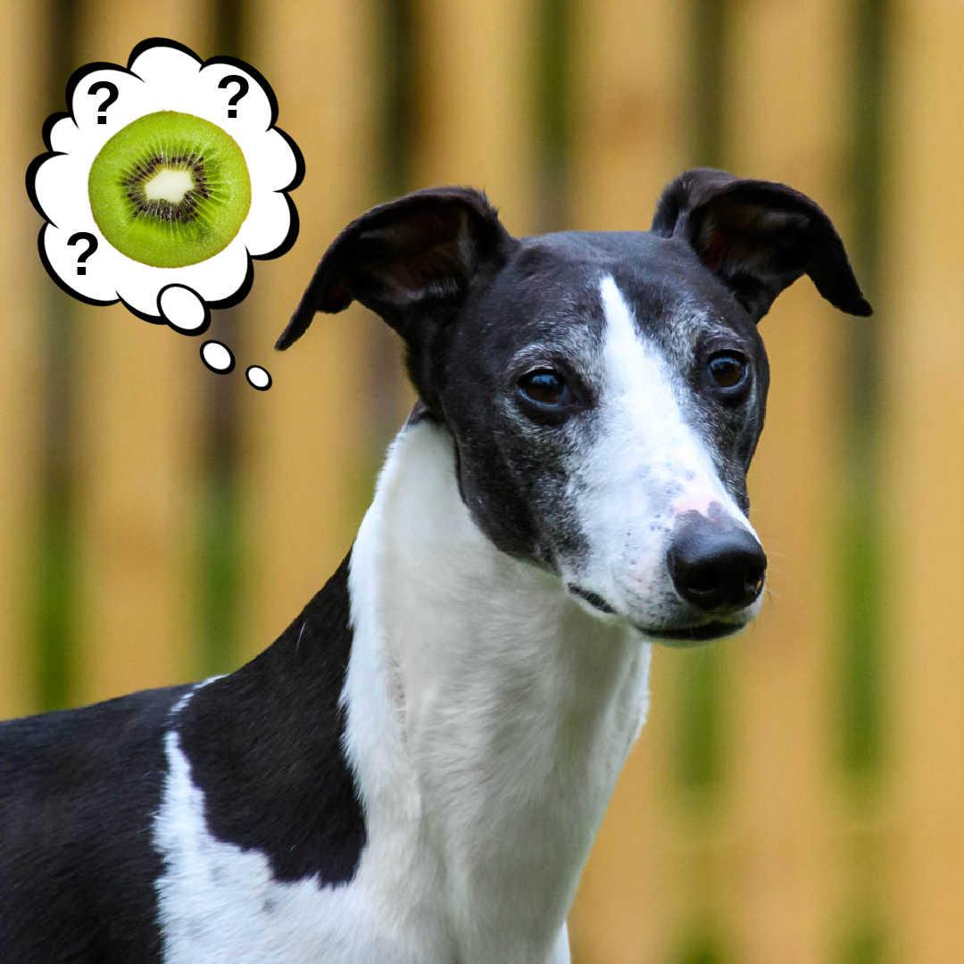 dog wondering about kiwi