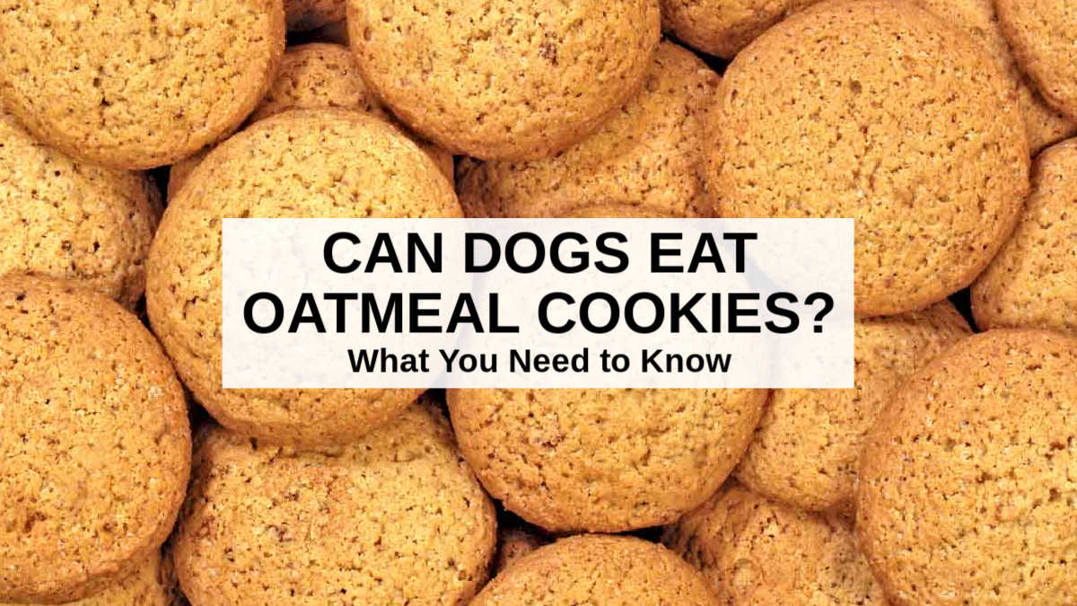 a bunch of oatmeal cookies