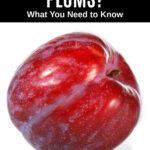 a fresh plum