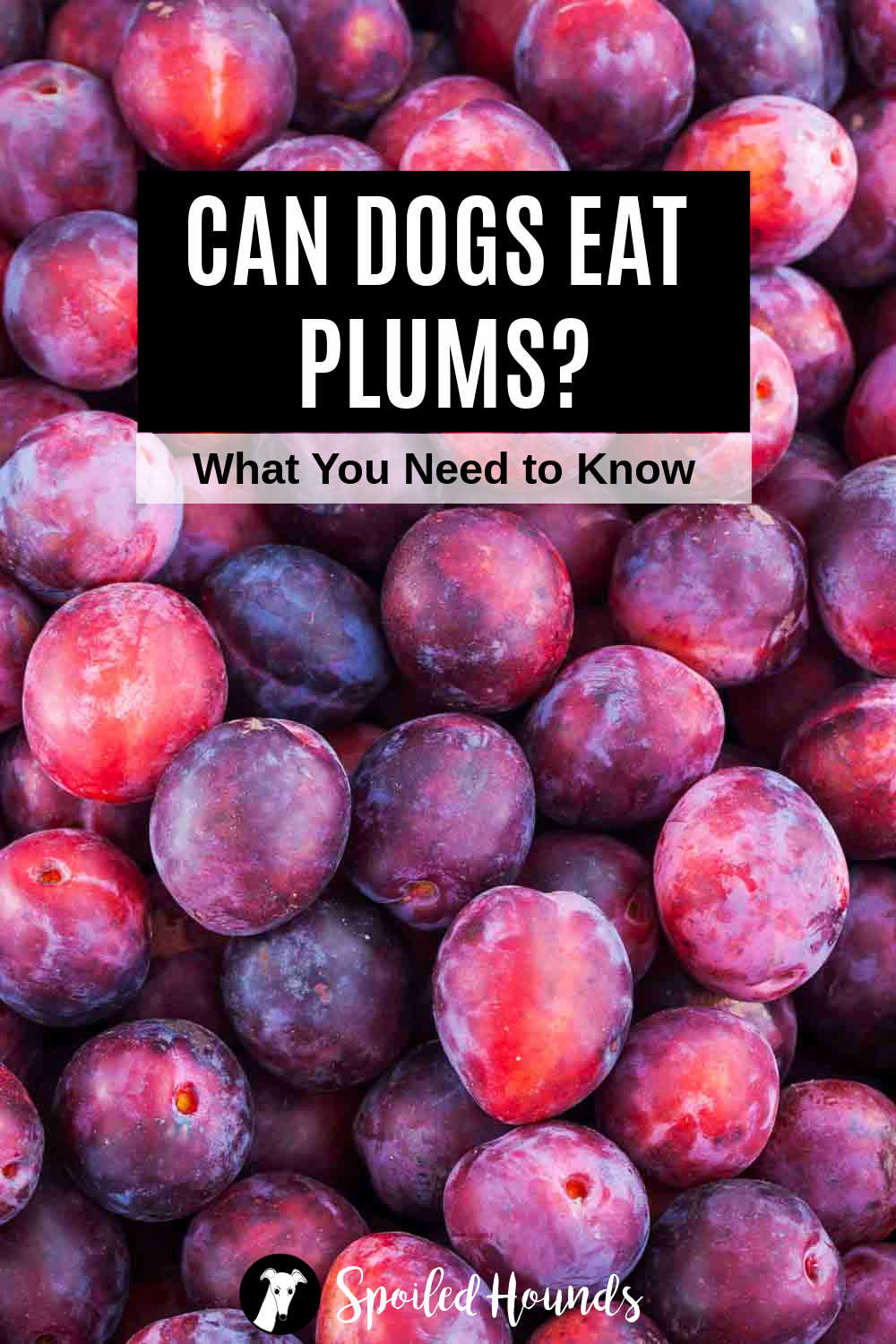 a bunch of fresh plums