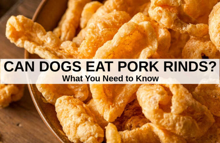 a bunch of pork rinds in a bowl