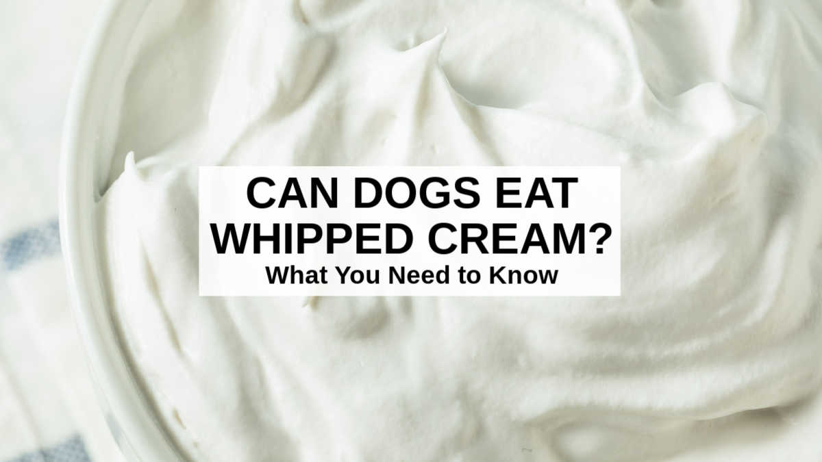 closeup of whipped cream in a bowl