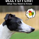 whippet dog wondering about bell peppers