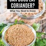 ground coriander and coriander seeds in bowls