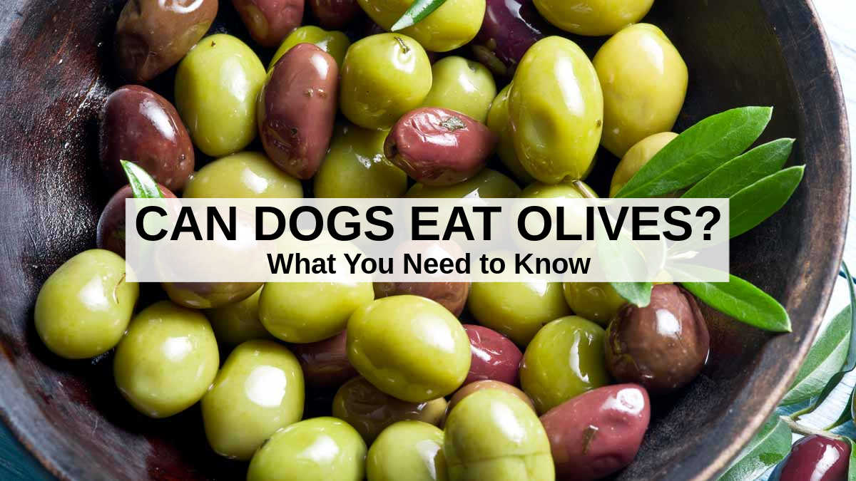 black and green olives in a bowl
