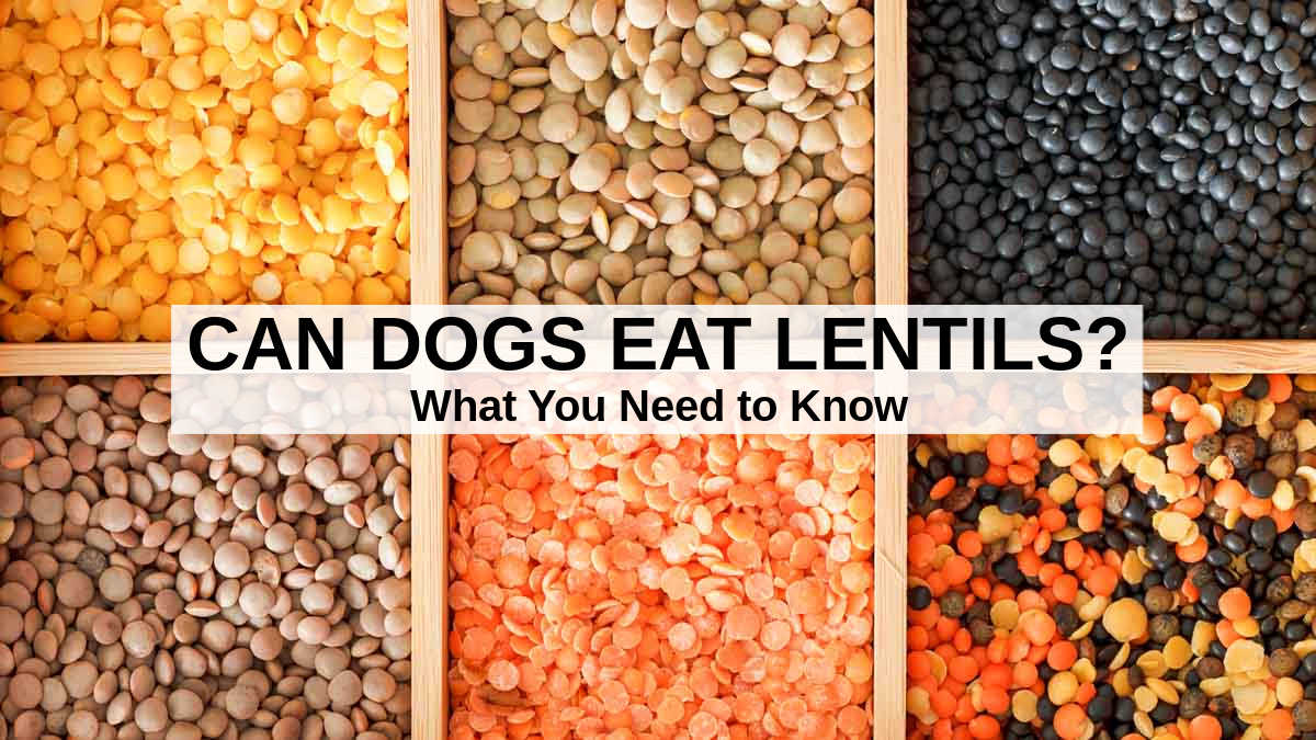 assorted dried lentils in a divided box
