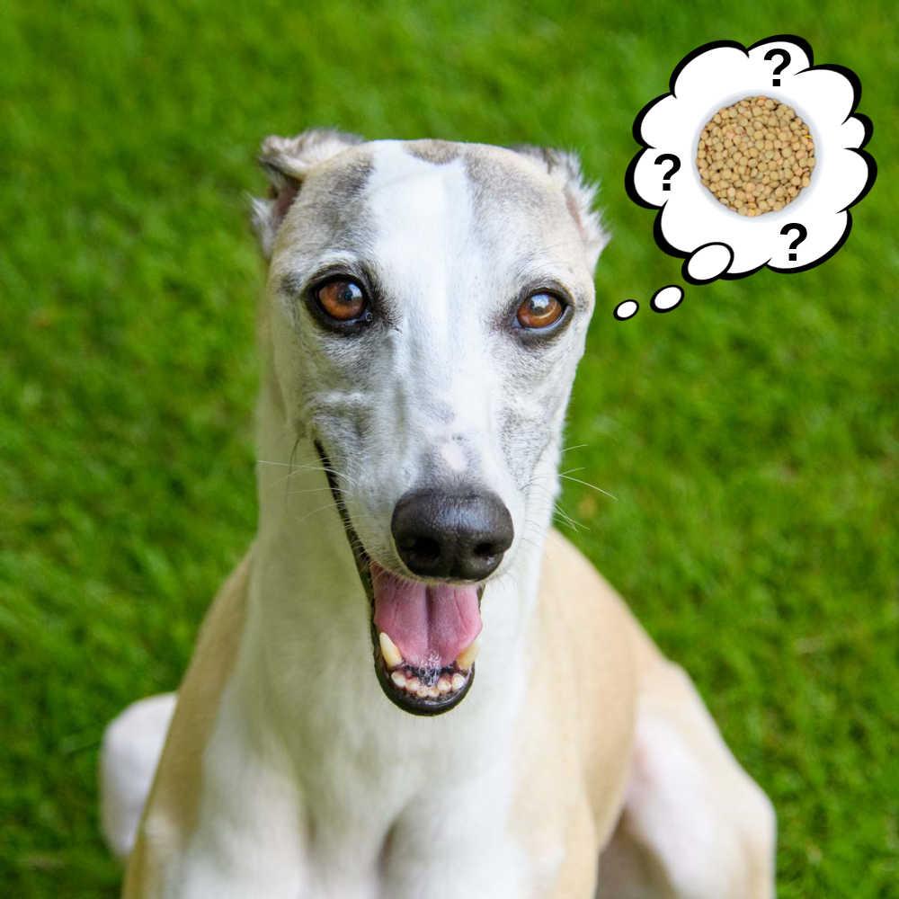 dog wondering about lentils