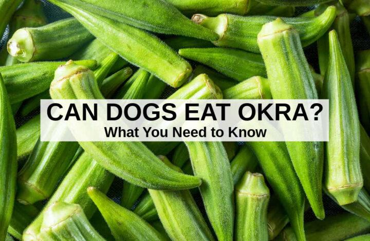 a bunch of fresh okra.